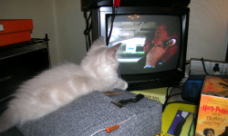 She likes NCIS too! She really is a perfect cat!