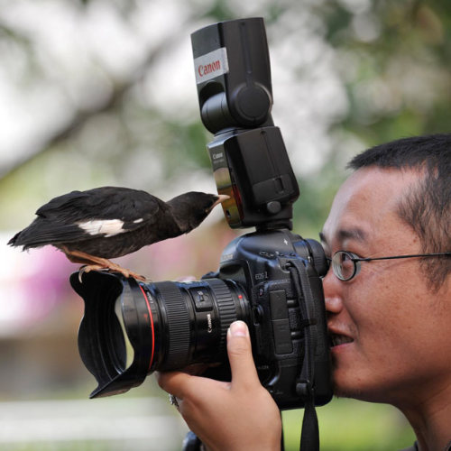 allcreatures:  Pet bird Xiao Nuo pecks at the flash while perched on the lens of a camera during an interview by local media with its owner in Kunming, Yunnan province, China. The bird is attracted to cameras and will approach and investigate any cameras it sees, according to the owner. Picture: REUTERS/Wong Campion (via Pictures of the day: 18 August 2011 - Telegraph)