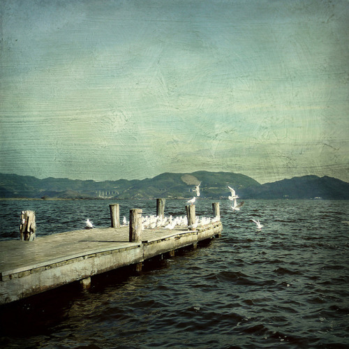 iiiamchelseaaa:  Seagulls on the Pier  by Visualtricks on Flickr.