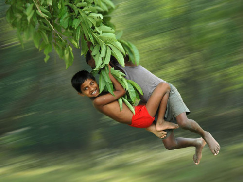 Tree Swing - childhood freedoms