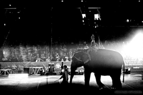 First time to the circus as an adult, and I believe I was even more awestruck than I was as a child. Several photos captured my experience quite well, but none like this image.  Most likely because of the subtlety that I appreciate in it.  This is not one of the many majestic moments, but the surreal lighting combined with the way the audience is actively a part of the space, makes this one, mine.