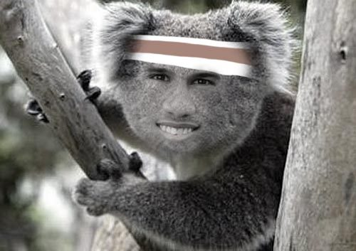 By request, Paddy as a koala bear.