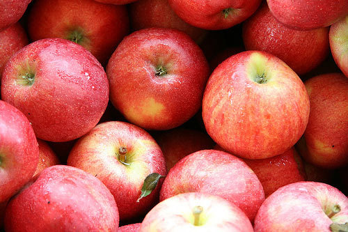 Join us for an Apple Picking Trip on Saturday October 15, 2011Call 416-656-5778 or contact a CCESO Board member for more info!