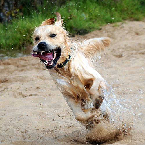 magicalnaturetour:  Sheer Enthusiasm (by Zenotri) ~ Happy Wednesday lovely friends :)