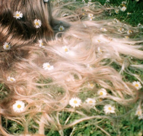vulpic:  cca330:  all the pretty daisies  all of them