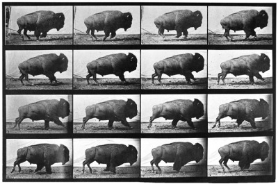 Eadweard Muybridge - Buffalo; Galloping, 1887
