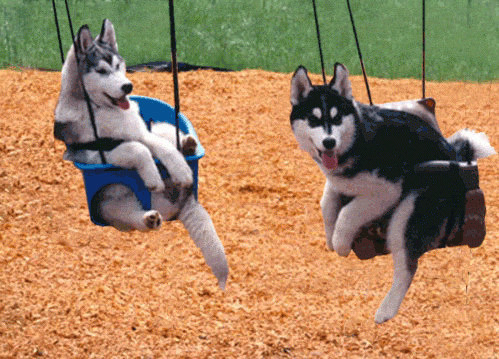 walletbluff:  Two young lads.  GET OFF THE SWINGS DOGS!