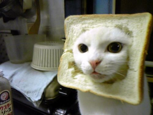 in-bread cat  画