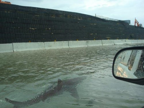 theeverydaygoth:  l0stinthem00d:   After Hurricane Irene hit Puerto Rico, the streets were so flooded that a shark managed to be swimming around.   oh my fucking god  I'm done. I'm moving to the West coast. No sharks in the streets there, I hope.  O:
