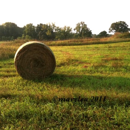 Hay bales. Morning walk today. Late post. August 24, 2011. #farm #rural #august #morning #summer #maryleafaves #mlm #haybales #hay  (Taken with instagram)