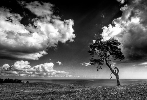 Tree II mono crop | HDR by u n c o m m o n
