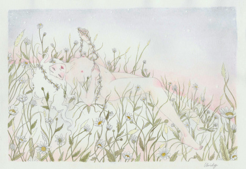 calliopebridge:  daisy chain watercolour and graphite  by Calliope Bridge