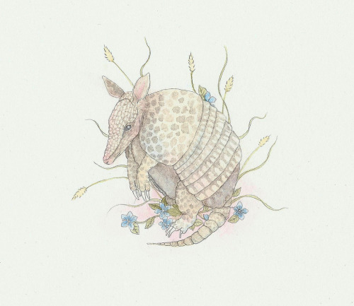 armadillo watercolour and graphite  A birthday gift to a friend by Calliope Bridge