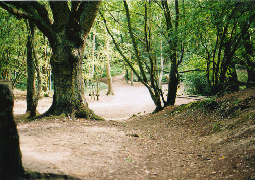 Mousehold Heath. on Flickr.