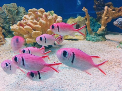 More pink fishies :)