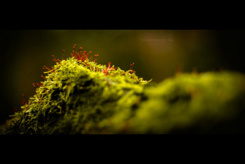 » Lollypops by ~:. Jeff .:~ on Flickr.Via Flickr: Moss 50mm @ F1.4 Shot with a Pentax smc P-M 50mm F1.4 (manual) Love these pictures.