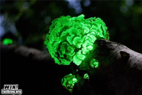 Epic Win-Glow in the dark fungus