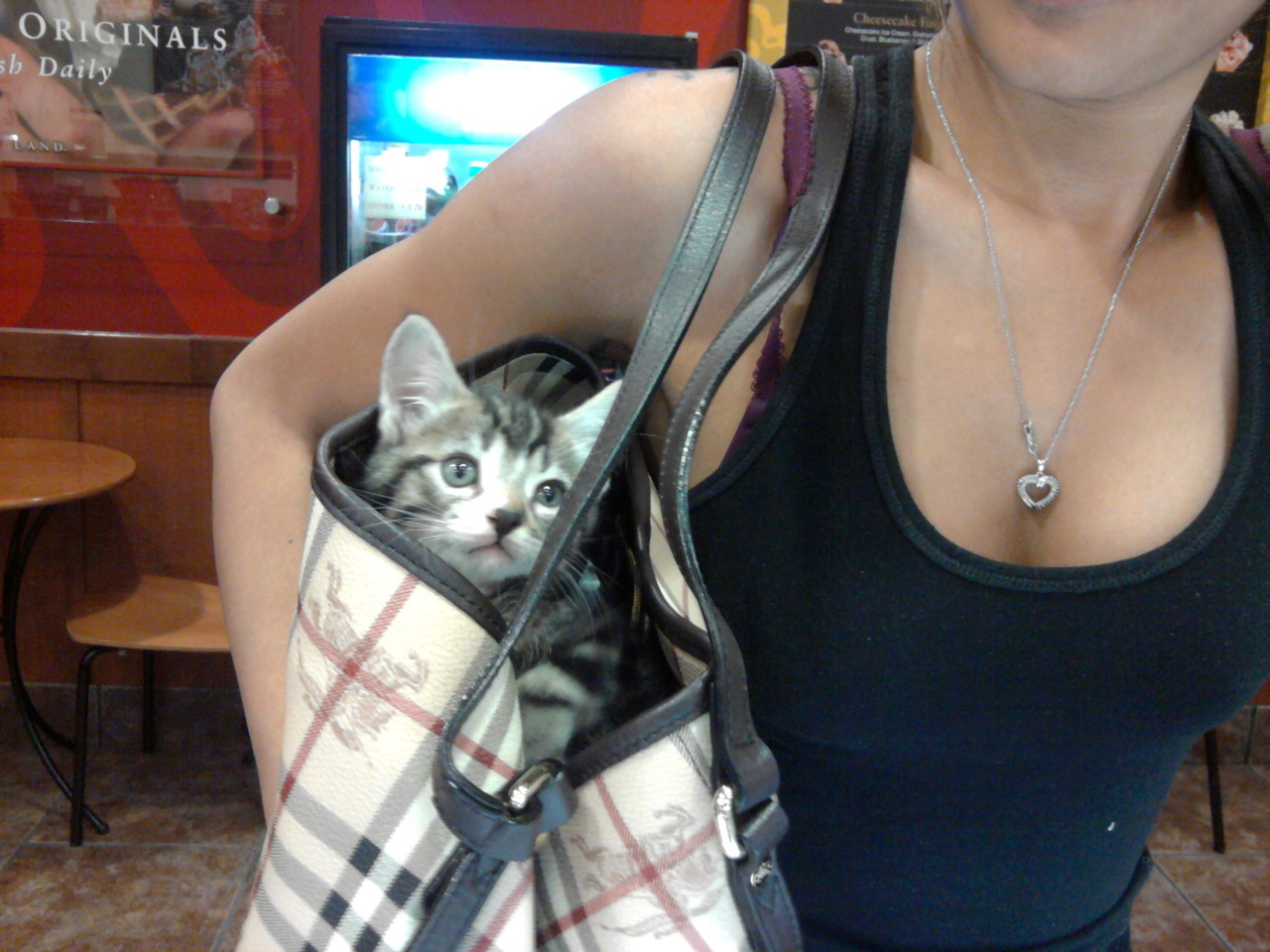 oundywear:  this made my night @ work :)) Wittle kitty in Jennas purse. Haha  hello, meet my kitty Nike <3 (:
