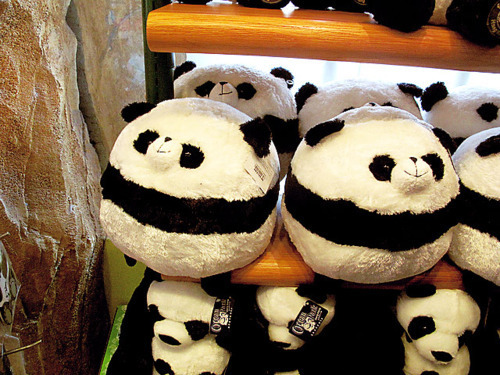 ohmyasian:  (via absolute-best-posts)2018. Panda Plushies. These overly-round, chubby pandas are the CUTESTT.