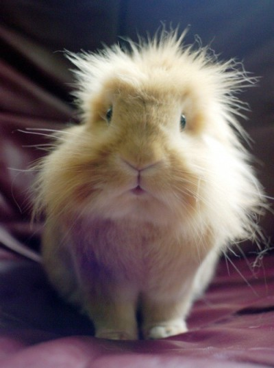 Aww, bunny with bad hair day! (via pinterest)