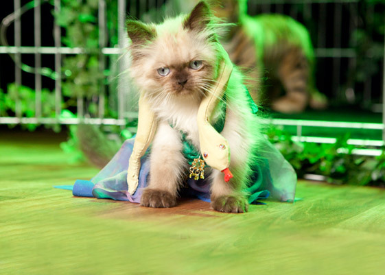 Uh, it's CATS DOING BRITNEY.  (Click here to watch it…if you dare.)