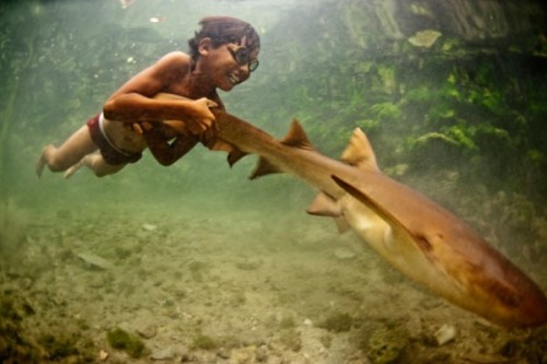 jackgoodwin:  This kid has a pet shark in a pen under his house in Indonesia.  He plays with it like a dog.