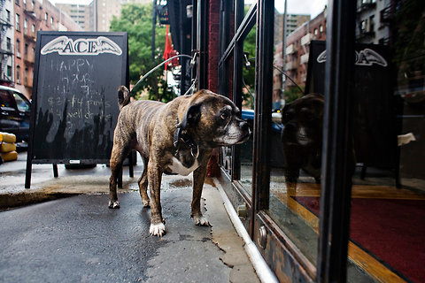 antikris:  meowsense: New York Tradition Ends as Bars Shut Doors to Dogs This is a serious bummer  This needs to happen in CA. Your dog can't really play poker, people, leave them at home.