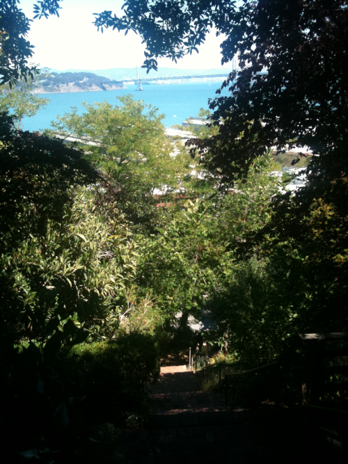 The Bay Bridge seen through all the foliage.   Greenwich St at Telegraph Hill.
