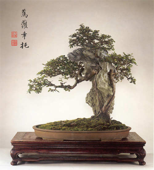 webraccoon:  Penjing by Man Lung.
