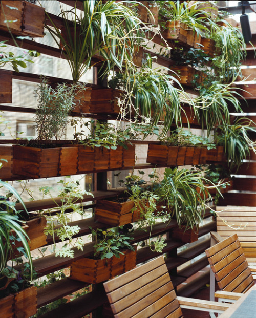 wallacegardens:  Plant Wall: Zizmor House, Upper West Side, NY.