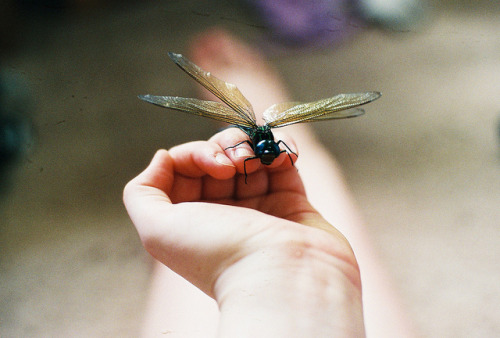 prevums:  Fly Away by sort of beautiful on Flickr.