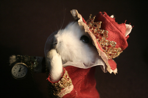 Taxidermy White Rabbit for sale (based on Jan Svankmajer's version from Alice). ~ Alice in Wonderland. http://tiny.cc/tqg8j