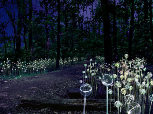 woonder:  Bruce Munro / Forest of Light