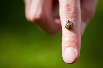 Brown Ladybug on my Finger (by TylerKnott)