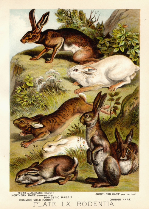Johnson's Household Book of Nature, 1897.