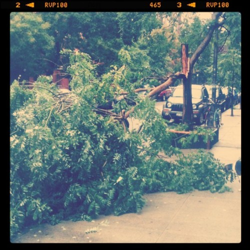One of the (thankfully) few signs of Irene's visit in my 'hood (Taken with instagram)
