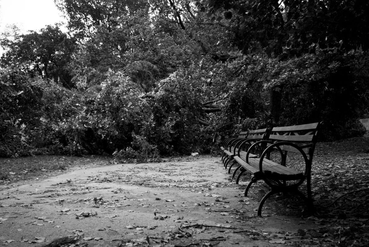 Hurricane Irene - Prospect Park Damage. There used to be a path here… danieljulier@gmail.com