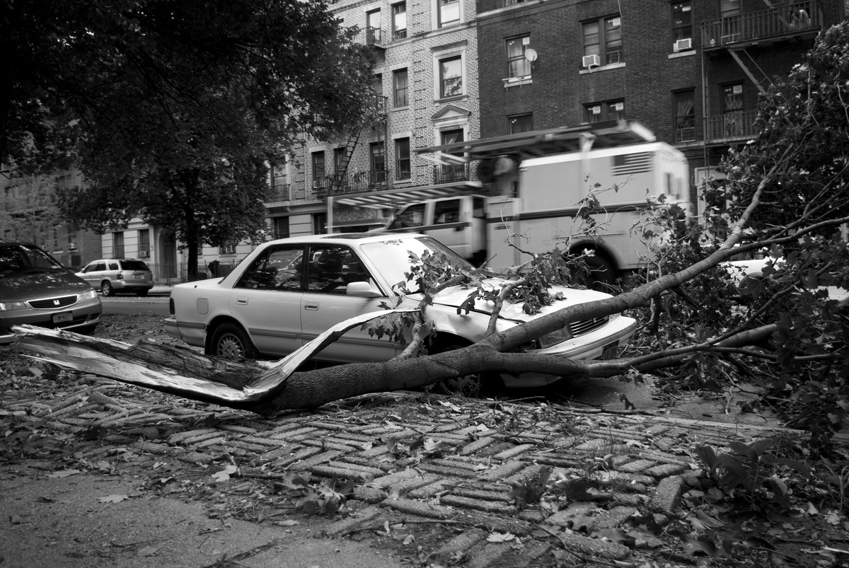 Hurricane Irene - Prospect Park Damage. Was walking down the street as this fell onto the car, I had no idea wood cracking in the wind made such a HUGE noise… Standing next to this thing to take a photo made me think twice about what I was doing, standing under the tree while the wind ripped though it… I left after taking two shots. danieljulier@gmail.com