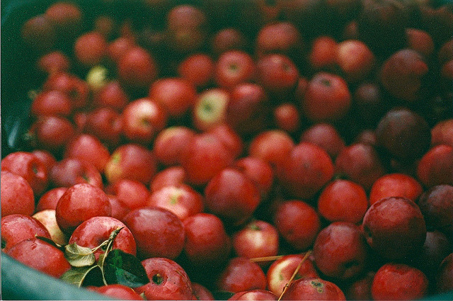 paxaros:  Apples, Apples by Samantha Nason on Flickr.