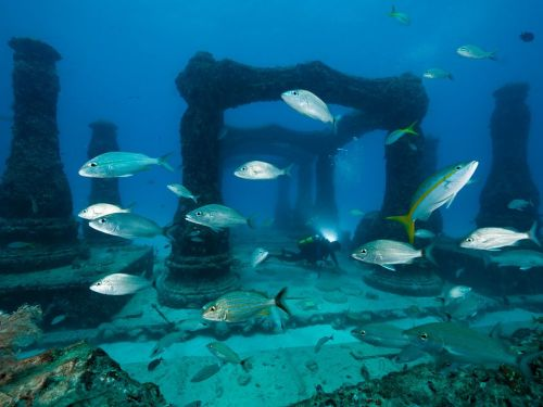 Tomtate grunts and yellowtail snapper swim through Neptune Memorial Reef, an underwater cemetery with decorative arches and columns installed on the ocean floor off Miami Beach. The cremated remains of about 200 people have been mixed with cement and molded into memorial sculptures.