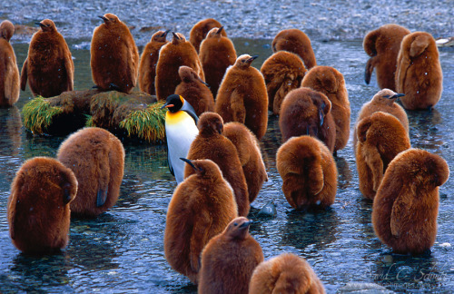 """Penguin Daycare"" by David Schultz"