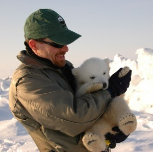 Good photo of WWF Arctic Programme's polar bear expert, Geoff York, with a polar bear cub. More on polar bears