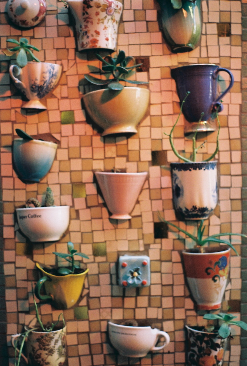 Cool vertical gardening idea — repurposing cracked or broken teacups, coffee cups and mugs as planters. Those of us who tend to overwater plants would need to be careful in watering plants — even succulents — planted in a mosaic wall like this. But still, I like.