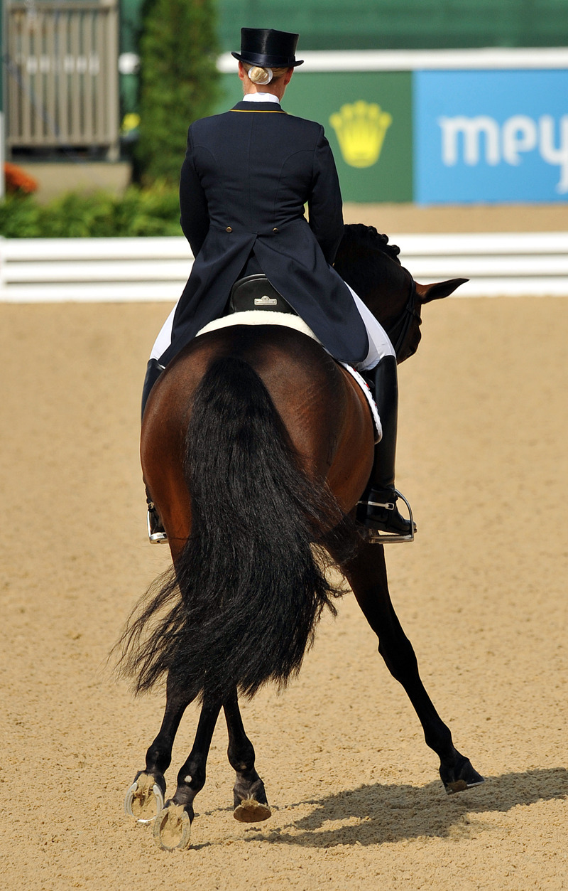 morethanriches:  disapprove of traditional dressage, but this is still a beautiful picture.