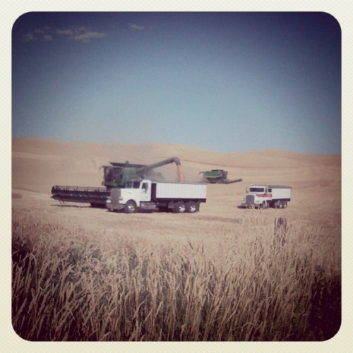 Harvest season #cycling #palouse  (Taken with instagram)