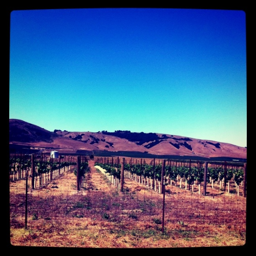 welcome to wine country.   (napa valley, california)