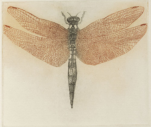 "sugarmeows:  ""Dragonfly"" (etching) from: Diptera: A Book of Flies & Other Insects (1983) – Leonard Baskin (1922–2000)"