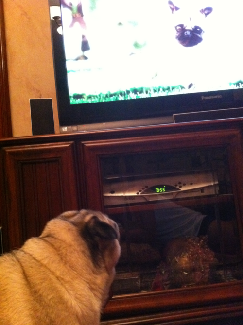 Miso envies good pug actors.