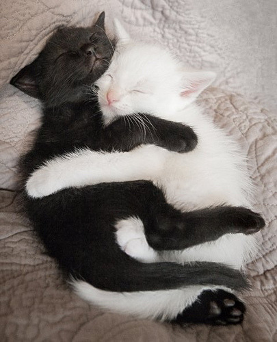magicalnaturetour:  Ying yang (by David.ir) ~ Sweet Dreams beautiful friends ♥