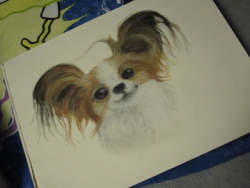 i drew a papillon (and then put it on a spongebob pillow)